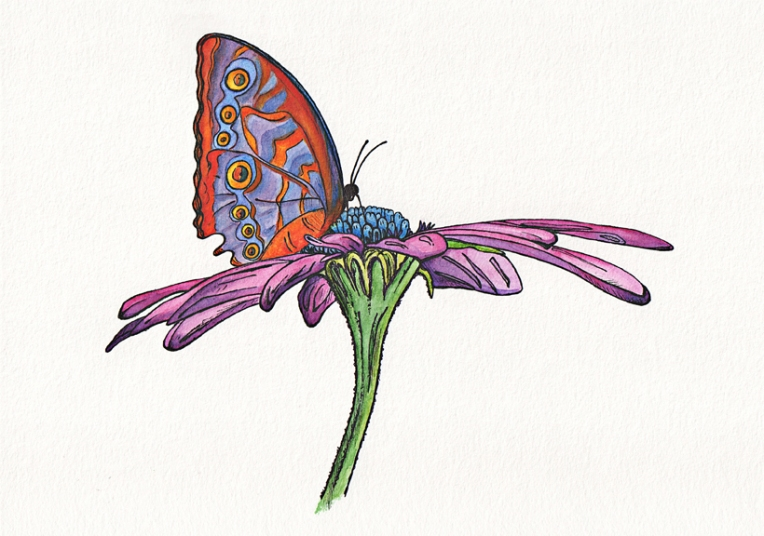Easter daisy – watercolour on paper, 200 x 290 mm, 2012.
