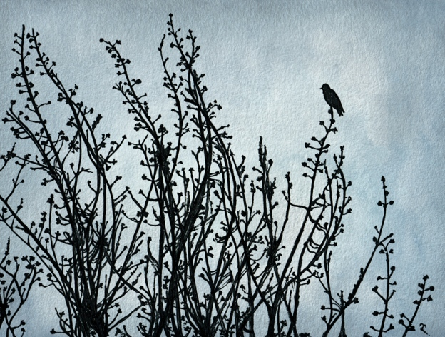 Black bird on a grey day – ink and watercolour, 125 x 170 mm, 2012