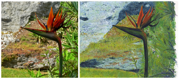 New Zealand bird of paradise photograph acrylic painting