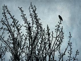 #7  Black bird on a grey day
