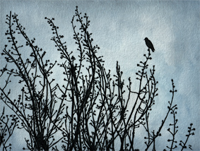 #7  Black bird on a grey day