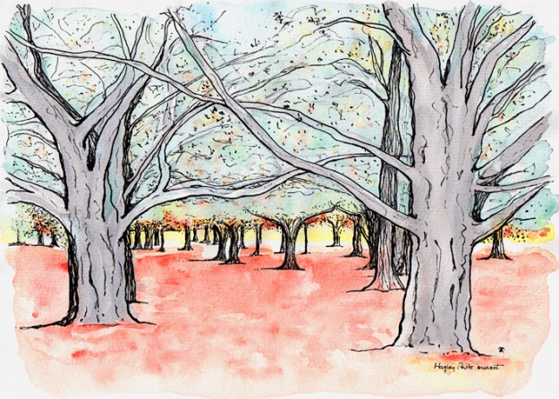 Hagley Park sunset sketch – ink and watercolour, 205 x 290 mm, 2013.