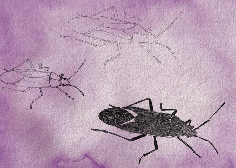 Beetles – ink, watercolour and digital