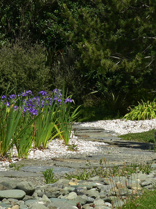The iris patch – Nelson, 2011