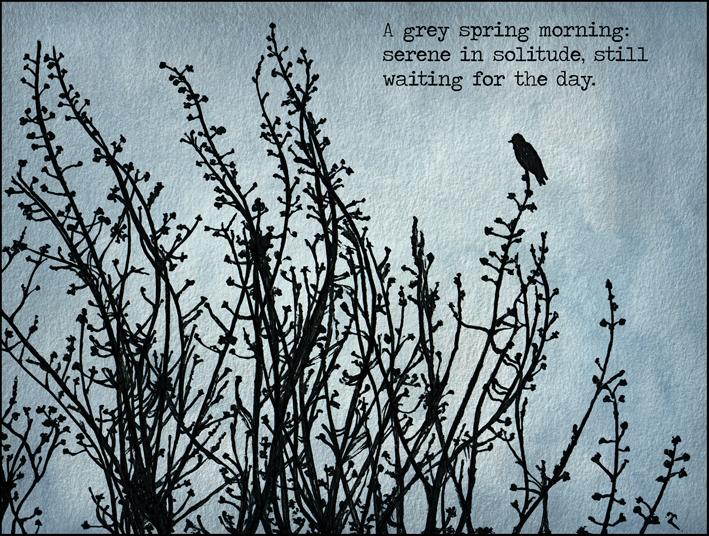 Anna Cull Black bird haiku