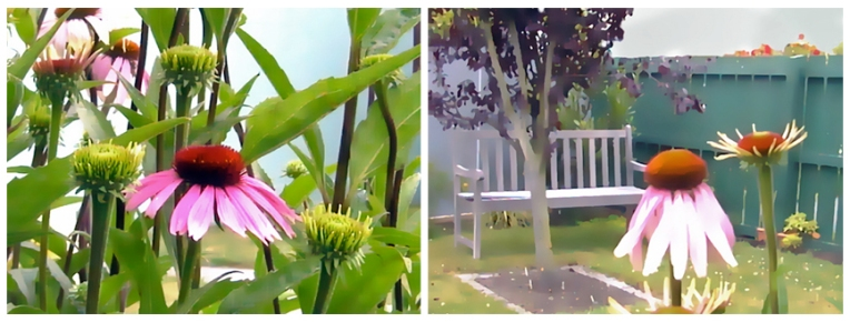 Purple coneflowers, digitally edited photographs – Christchurch, 2003