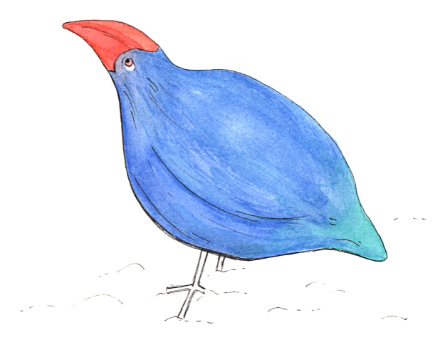 Takahē — ink and watercolour sketch, 2011