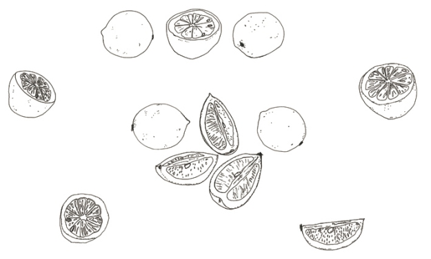 Lemons – ink on paper, 2010