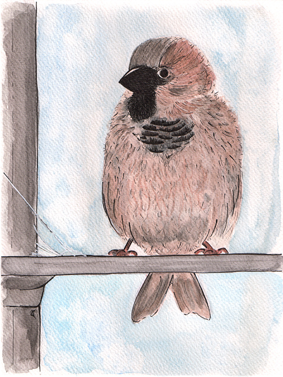Little sparrow — ink and watercolour study, 240 x 180 mm, 2014