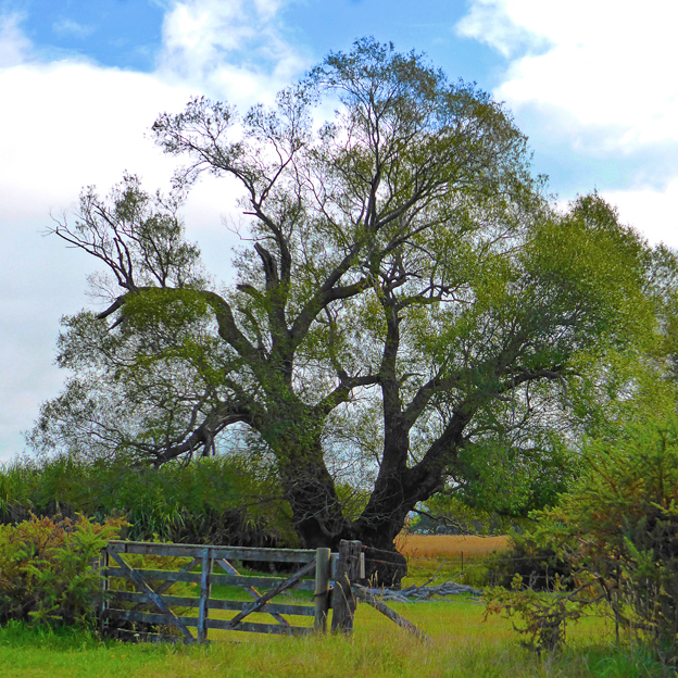 Country gate, North Canterbury, 2014