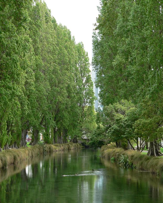 Poplars, Christchurch (NZ), 2014