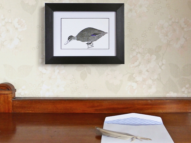 Grey Duck note card, framed