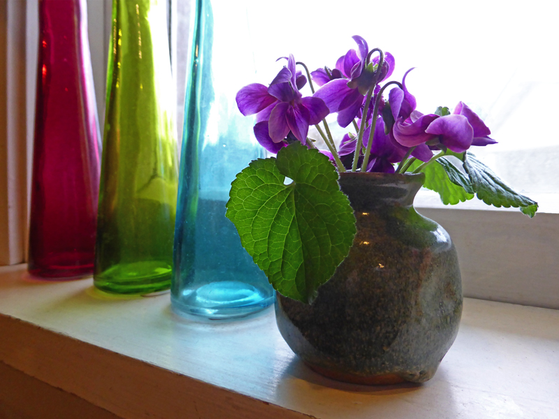 Violets in the kitchen, original photograph, 2015
