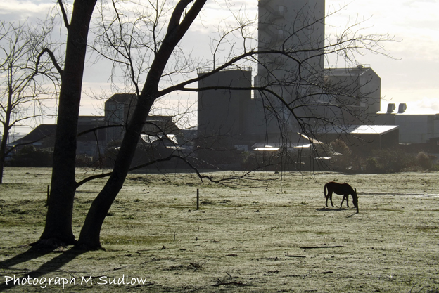 Cold morning — photograph © Maureen Sudlow 2015