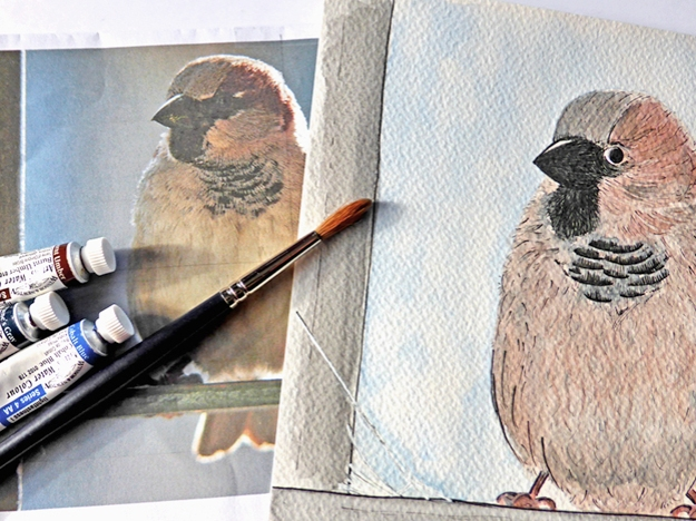 Little Sparrow — ink and watercolour, unframed 240 x 180 mm