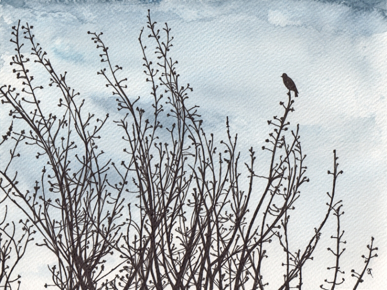 Anna Cull Black Bird — ink and watercolour, 240 x 180 mm, 2014