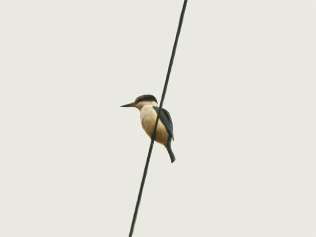 Bird on a wire — digital painting, 2016